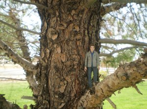 Edward in a tree